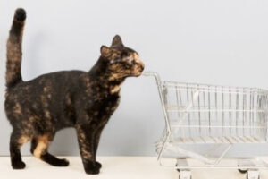 Tortoiseshell Cats Facts and Tortitude